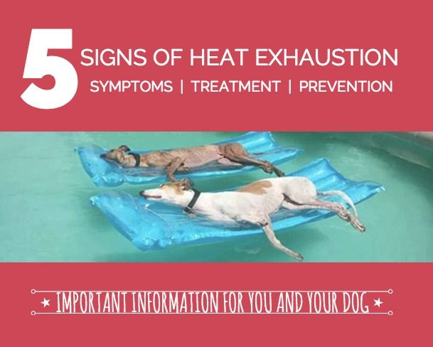 5 Signs of Heat Exhaustion in Dogs - an important issue for super active dogs! | If It Barks blog