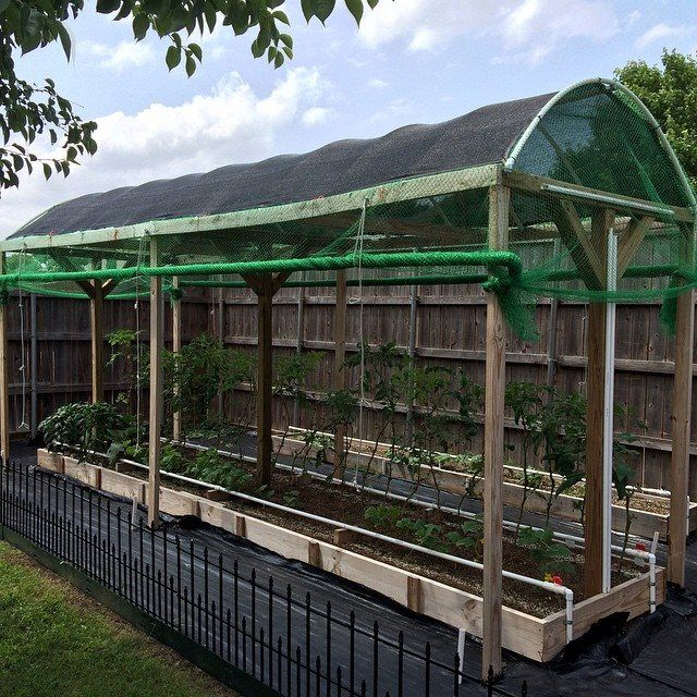 Nice raised garden with drip irrigation and bird netting installed by Brett Sanders.