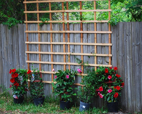 17 best images about how to hide an ugly fence on pinterest traditional dressing and chain - Garden ideas to hide fence ...