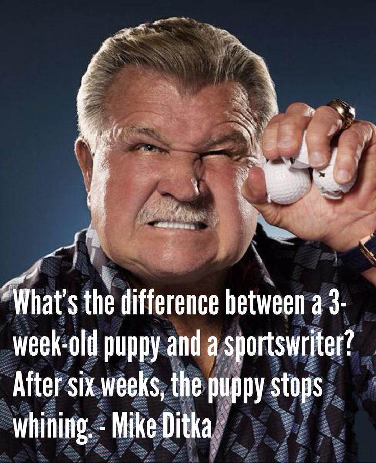 What's the difference between a 3-week-old puppy and a sportswriter? After six weeks, the puppy stops whining. - Mike Ditka. #nfl #quotes #inspiration