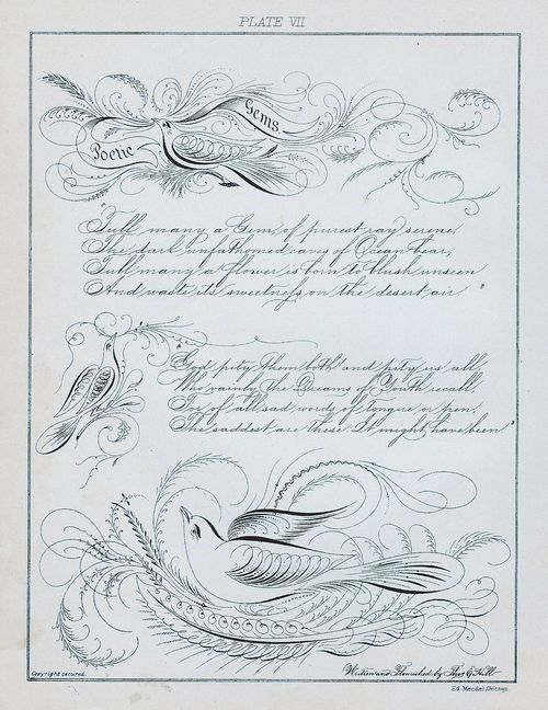 Share Spencerian Script With Birds Calligraphy