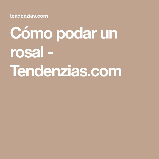 Cómo podar un rosal - Tendenzias.com