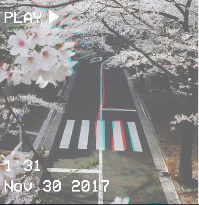 M O O N V E I N S 1 0 1    #vhs #japan #blossom