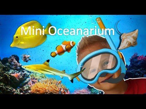 Shark! Mini Oceanarium visit  Sea Life. Kolobrzeg.  Blue Orange