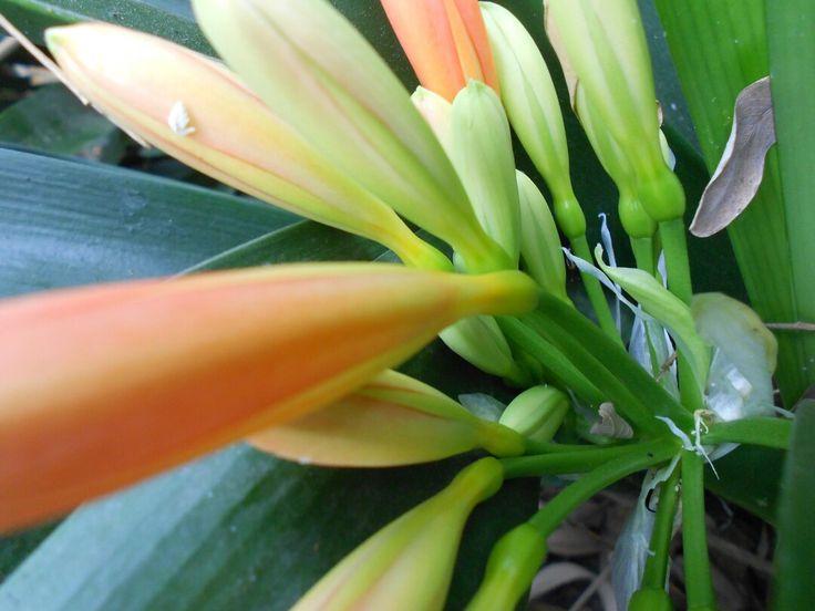 #Colours #Petals #Close_up
