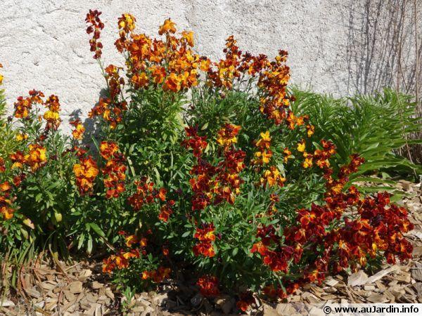 foto de 137 best images about Fleurs et plantes on Pinterest