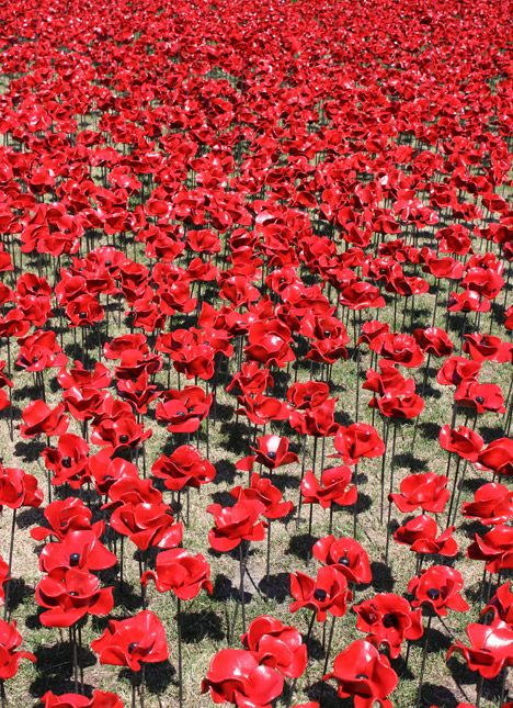 Thousands of ceramic poppies have been planted around the Tower of London to mark tomorrow's centenary of the First World War.