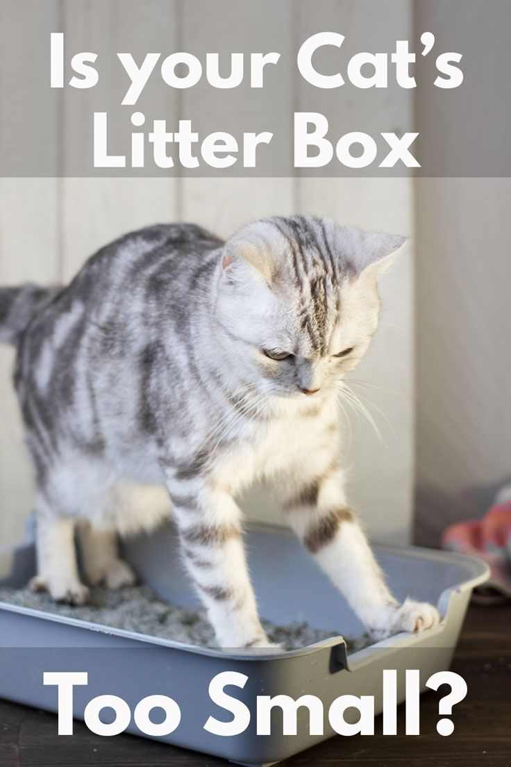 Is Your Cat S Litter Box Too Small Litter Box Cat Care Cats And Kittens