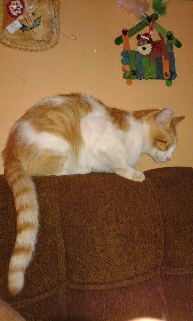 Hoy #29/12/2014 se cumple #1 #año de haber encontrado a este #lindo #gato y haberlo #adoptado por el nombre de #pelusa #instakat #instacat #cat