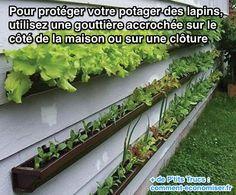 Pour protéger votre potager, il suffit d'utiliser une gouttière pour créer un potager sur le côté de votre maison ou sur une barrière.  Découvrez l'astuce ici : http://www.comment-economiser.fr/empecher-lapins-de-venir-dans-jardin.html?utm_content=bufferfc84d&utm_medium=social&utm_source=pinterest.com&utm_campaign=buffer