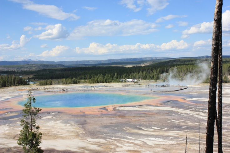 Bacteria help produce the spectacular colours of the Grand Prismatic Spring, Yellowstone WY, August 2010.