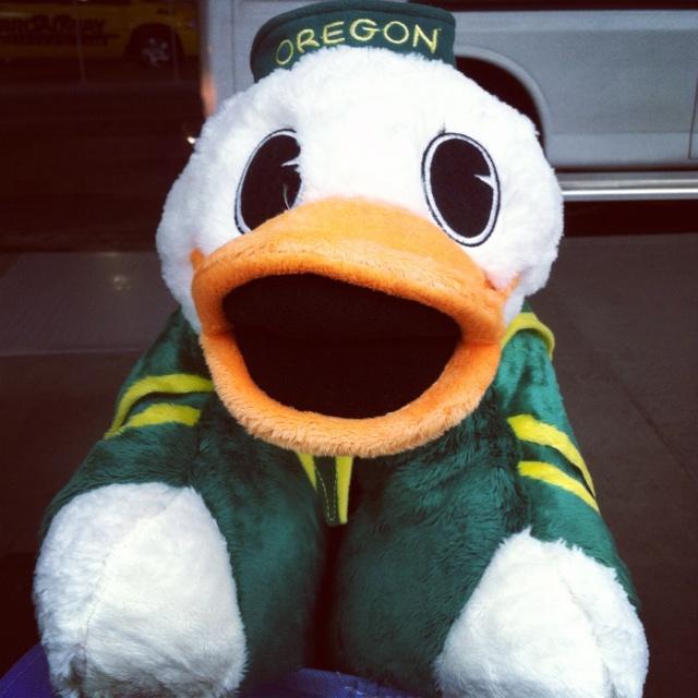 Proud Owner Of An Oregon Pillow Pet Go Ducks Go Ducks
