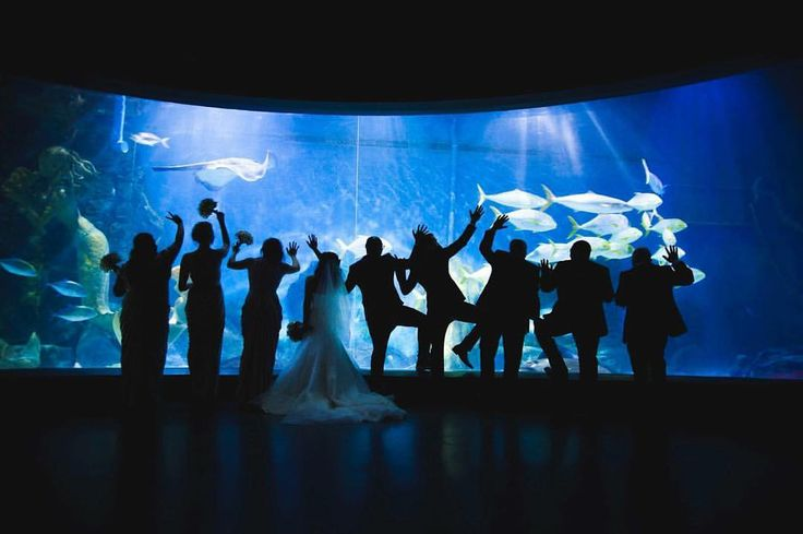 """Samantha Moody Photography 📷 on Instagram: """"When they turned the lights off in the aquarium 😲😍 #samanthamoodyphotography #wedding #melbournephotographer #melbournewedding #aquarium"""