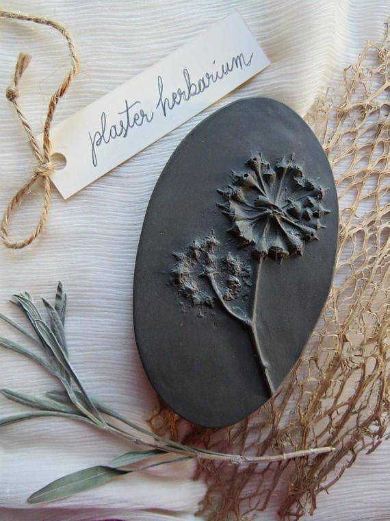 Eucalyptus Seeds Tile Botanical Casts and Flower Fossil
