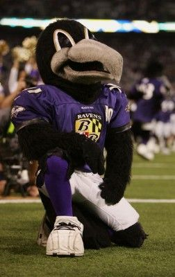 Poe the Raven, current Baltimore Ravens mascot. He made his debut in