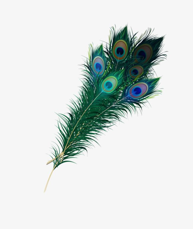 Pluma De Pavo Real Peacock Images Black Background Images Peacock Embroidery Designs