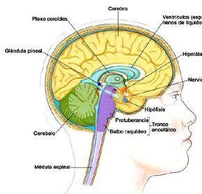 O olho da mente, cientificamente conhecido como a glândula pineal, é considerado…