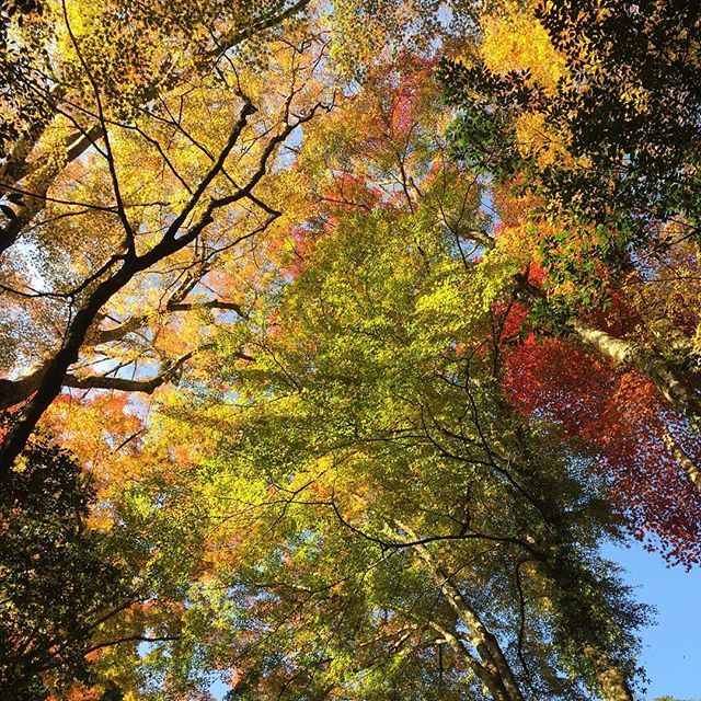 【a.s.a.n.o_】さんのInstagramをピンしています。 《#日本#鳥取県#智頭町#諏訪神社#田舎#自然#緑#森#マイナスイオン#文化#歴史#癒し#指定文化財#カメラ女子#紅葉#Japan#tottori#chizu#history#nature#relax#happy#healing#piece#2016#loveJapan#instagramJapan#follow#Loveit》
