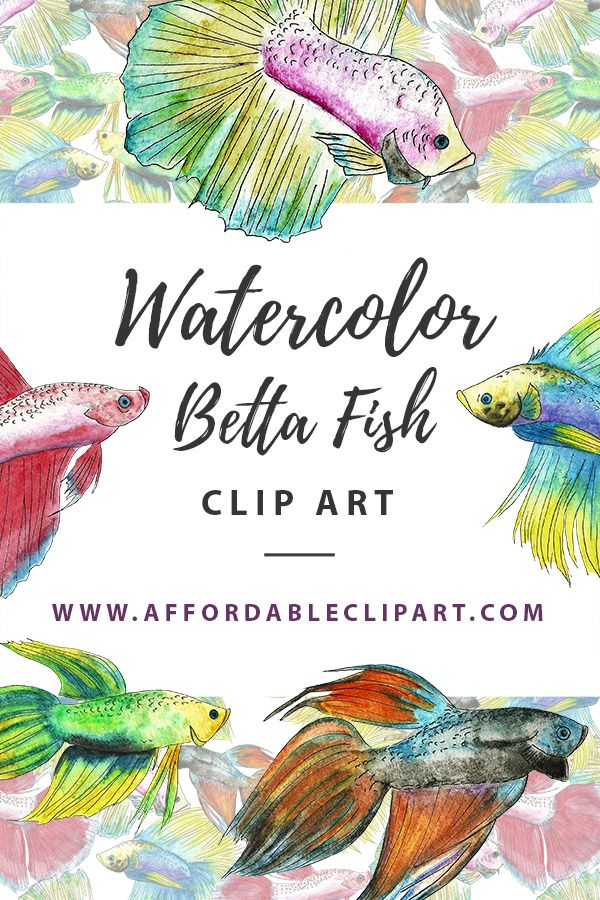 Watercolor Betta Fish Clip Art .PNG Instant Download on ... (600 x 900 Pixel)