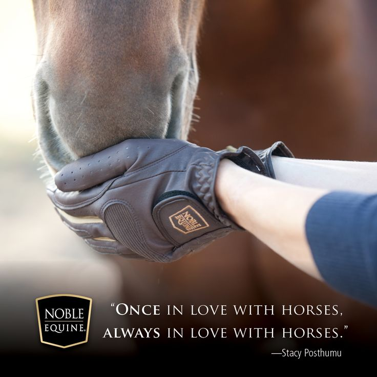 17 Best Images About Horse Quotes On Pinterest Happy