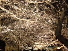 神戸市立王子動物園では毎年3日間だけ夜桜通り抜けというイベントが開催されます 神戸の桜の名所としても人気の王子動物園の夜桜ライトアップを楽しめるとあって毎年たくさんの人で賑わいますよ()v とってもロマンチックにソメイヨシノが輝いていて昼間とはまた違う雰囲気を楽しめます 動物たちは見る事が出来ませんが入園は無料です ただし桜募金をしていますので来場された時は100円の募金をお願いしています 今年は平成29年4月678日を予定しています 当日雨が降らないといいな ぜひ皆さんも夜桜を見に王子動物園まで足をお運びくださいませ tags[兵庫県]