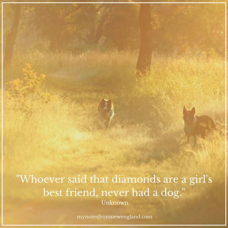"""""""Whoever said that diamonds are a girl's best friend, never had a dog."""""""