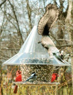Squirrel proof bird feeder with good DIY potential--big funnel + plastic canister + heavy plastic plate.