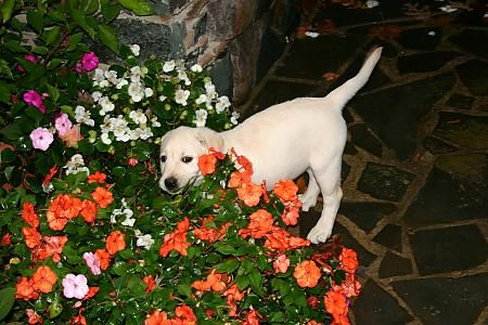 Dog Friendly Garden  Great ideas for ground covers and plants!!  A must read. . . .