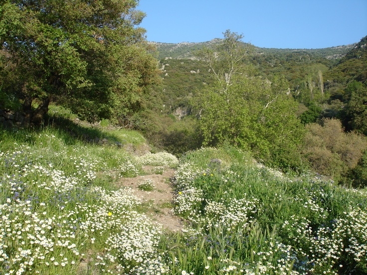 Spring flowers in the hills of Lesvos.
