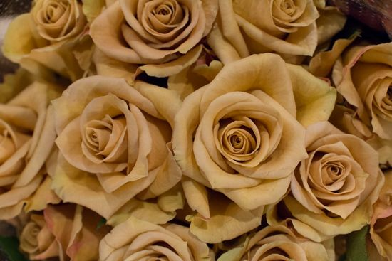 Pale Gold Combo Roses at New Covent Garden Flower Market - April 2016