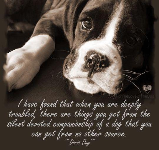 228 best images about dog quotes on pinterest designer
