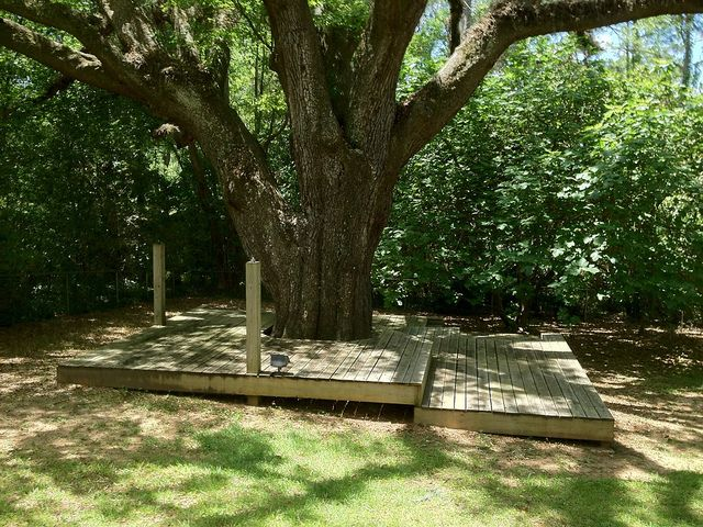 Garden Ideas Around Trees garden ideas around trees backyard landscaping around large trees easy simple landscaping ideas part 39 nice and around trees loversiq Find This Pin And More On Garden Dog Garden Ideas Deck Around Tree