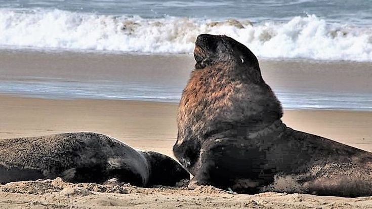 Yes, another post about sea lions!! We are just a little bit obsessed with them at the moment, we are seeing them everywhere.