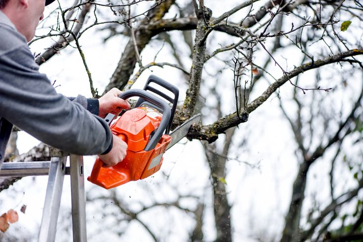 7 Reasons of Why To Leave Tree Trimming Pruning Services To Professionals #treetrimming #treeremoval