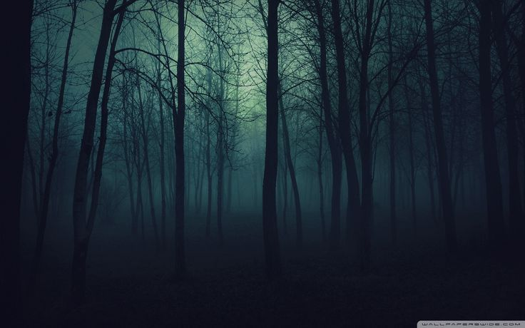 10 Most Popular Dark Forest Wallpaper Hd Full Hd 1080p For Pc Background Click Here To Download Wallpaper Hd Nature Download Wallpaper Hd Nature 10 Most Popu
