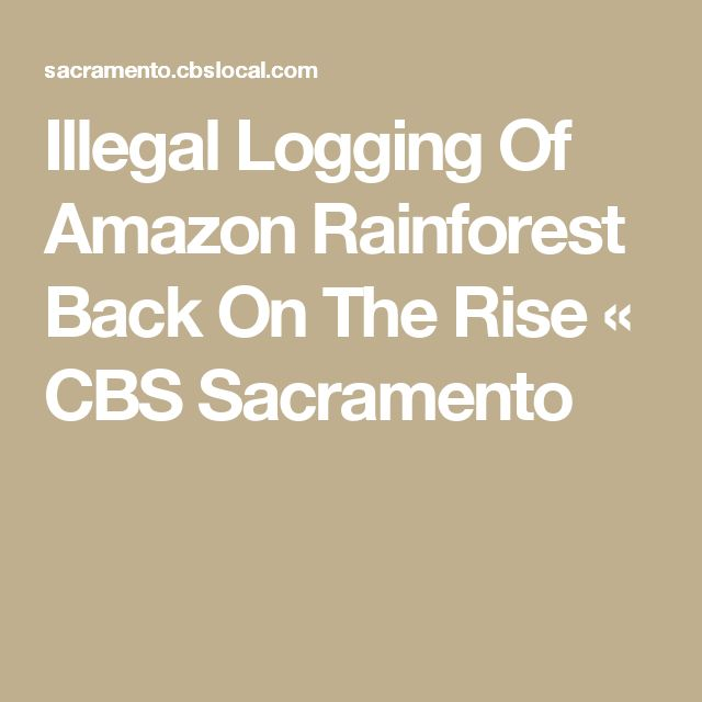 Illegal Logging Of Amazon Rainforest Back On The Rise « CBS Sacramento - we really have to get to grips with this escalation. The Governments whose territories include Amazonia have failed dismally. The tempo is picking-up & those very Governments are leading the charge with dams, etc & granting corporates to exploit.