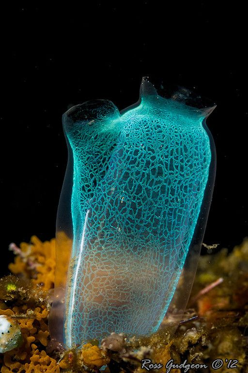 Sea-squirt (tunicates) ,  Deep sea creatures and things that grow beneath the water are fascinating and beautiful, so colorful.  We can never fathom so great a God that made it all.  We can only believe.