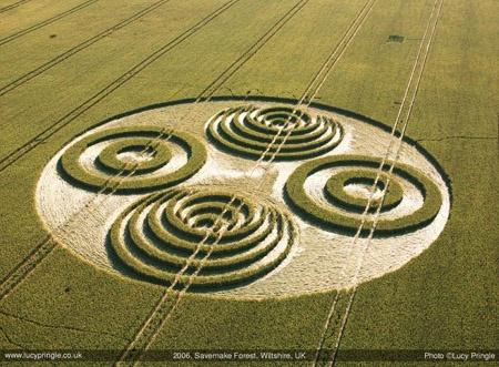 Savernake Forest Crop Circle 2006