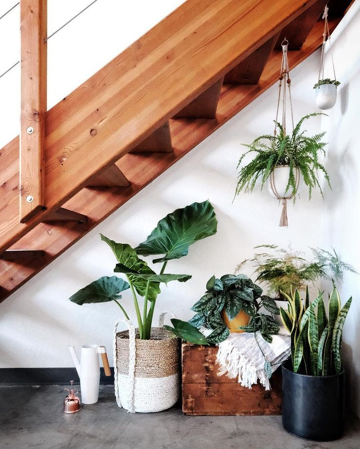 Plants in loft apartment via @kateogata | Cozy house, Home ...