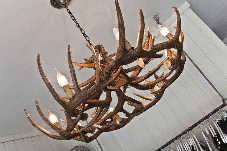 south of the border cronulla interior secrets, antlers, antler light, antler pendant light