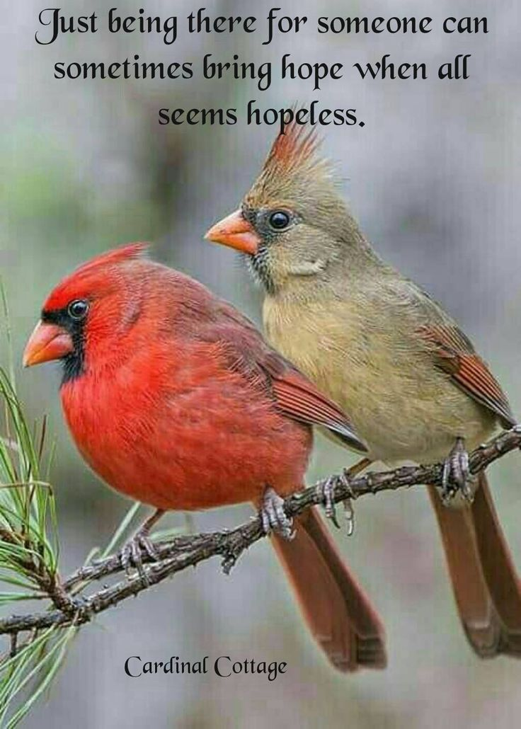 Just being there for someone can sometimes bring Hope when all seems Hopeless!!