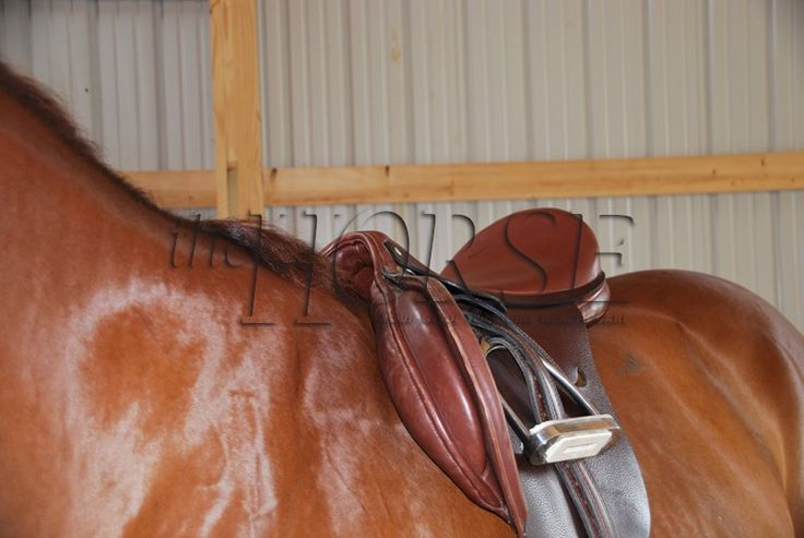 process analysis of saddling a horse [tags: business strategy process analysis]  the process of saddling a horse - saddling a horse can be challenging and yet extremely fun it is one of the many ways.