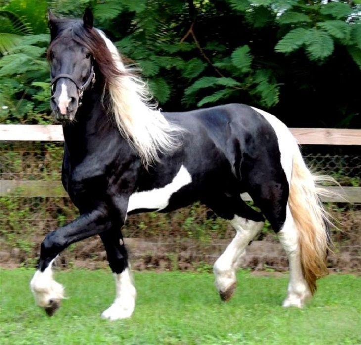Todas estas razas de caballos tienen  unas crines y un pelo preciosos. ¡Su belleza te sorprenderá!