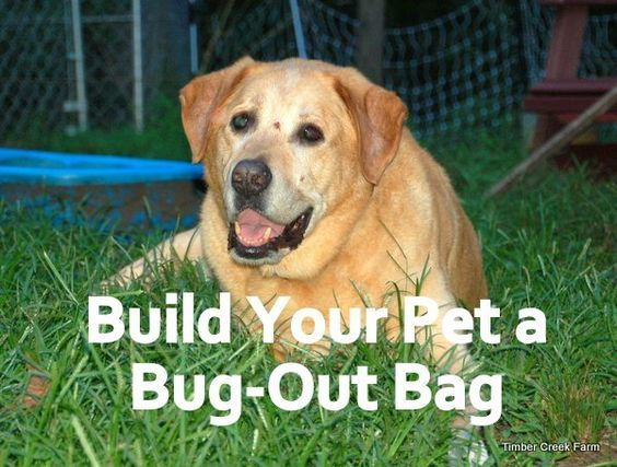 Build a pet bug-out bag and make sure your pets are ready to go when necessary. Family readiness includes having your pets ready too. Pet readiness.