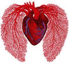 Heart health and air/pollution