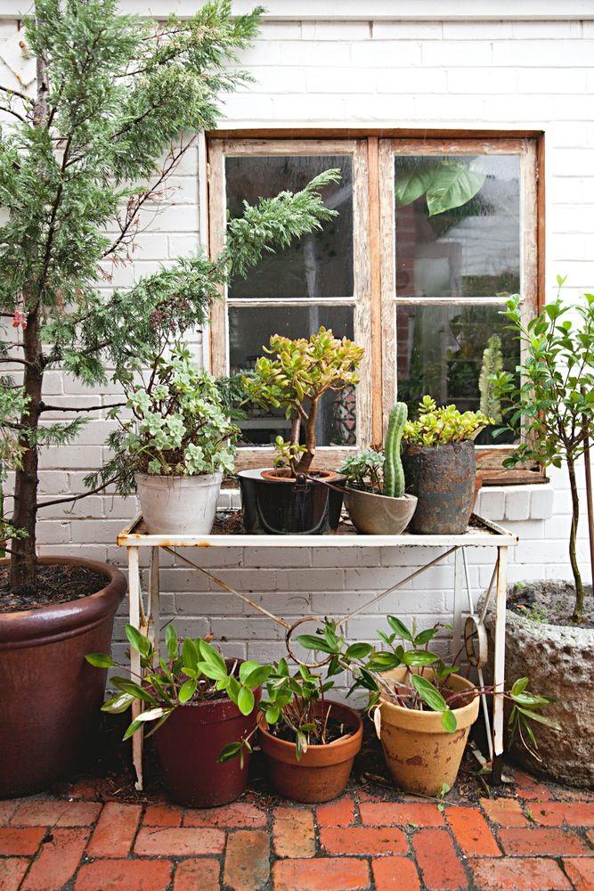 Art Deco House Plants