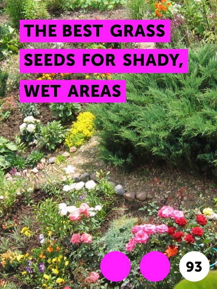 Gr Seed For Shady Lawn Mycoffeepot Org