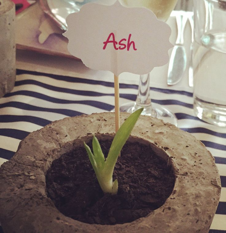 Bridal shower favours with a difference - handcrafted concrete planters