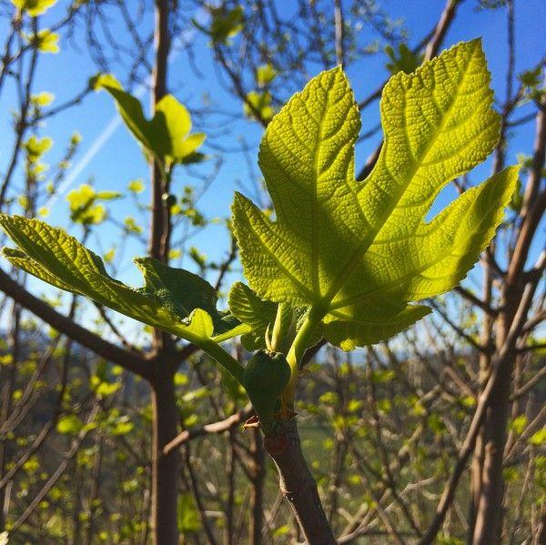 blomsterochbakverk.se - Fotoutmaning april 2015 - dag 10-18