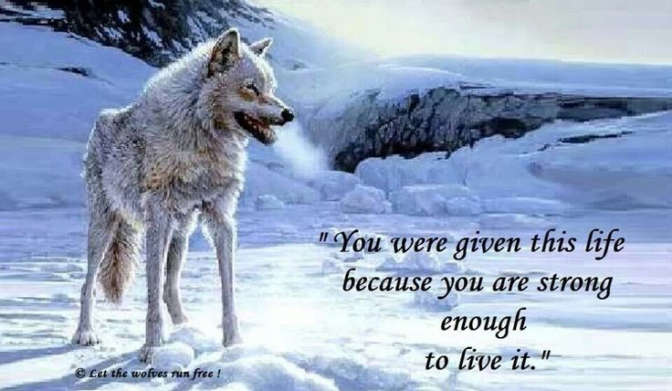Wolf Quotes About Strength: Good Thoughts